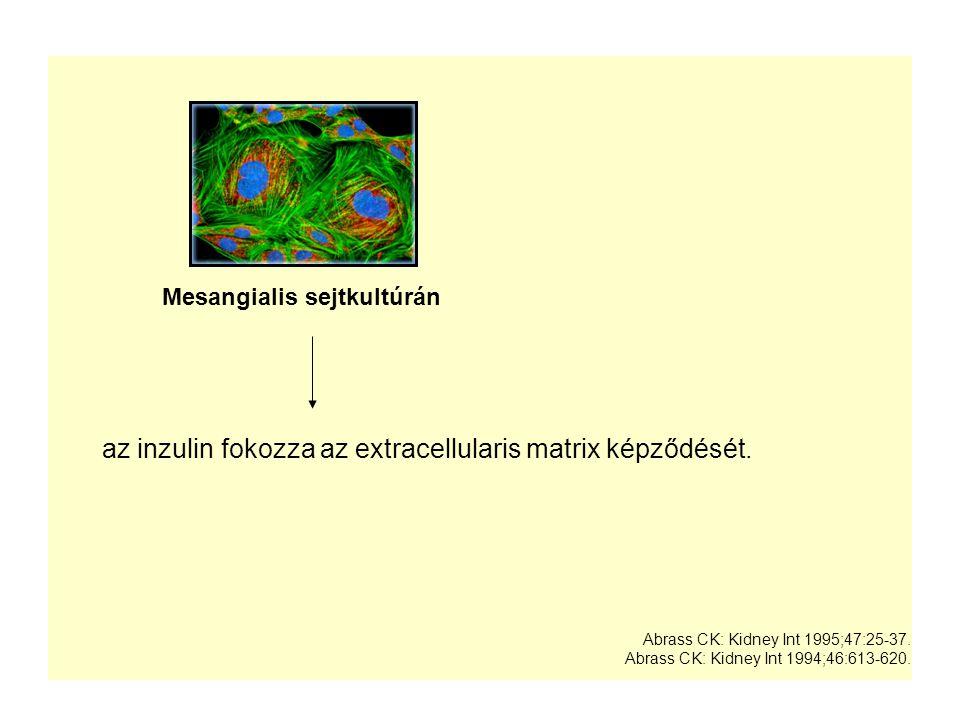Mesangialis sejtkultúrán az inzulin fokozza az extracellularis matrix képződését. Abrass CK: Kidney Int 1995;47:25-37. Abrass CK: Kidney Int 1994;46:6