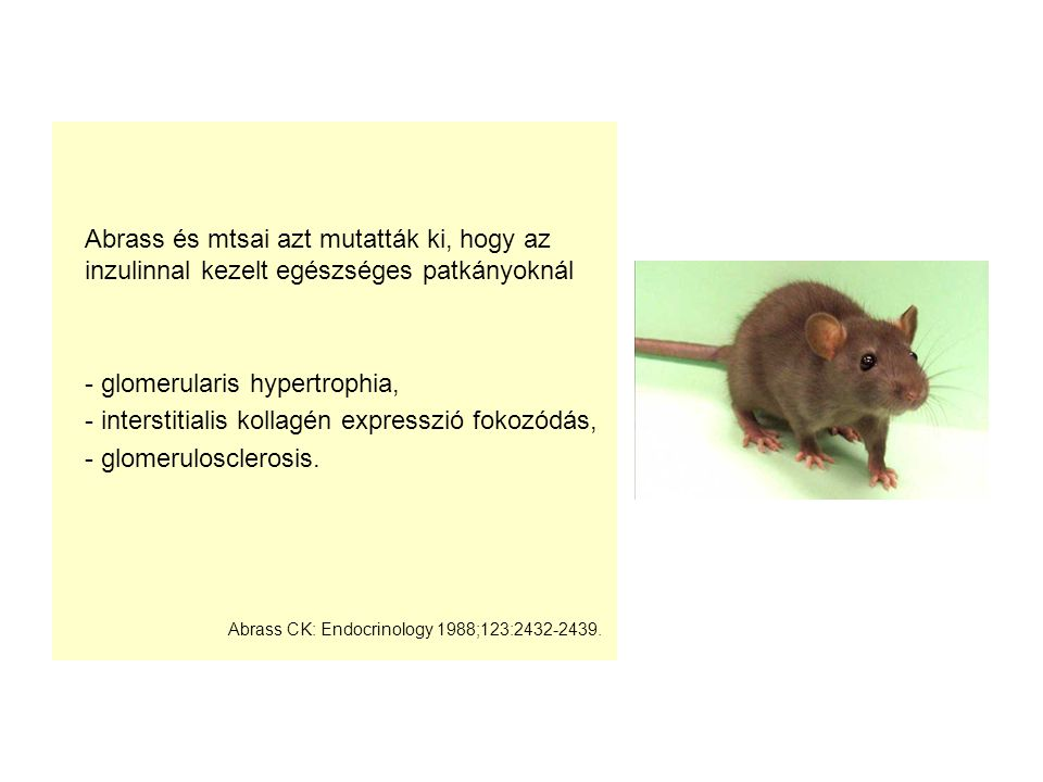 Abrass és mtsai azt mutatták ki, hogy az inzulinnal kezelt egészséges patkányoknál - glomerularis hypertrophia, - interstitialis kollagén expresszió f