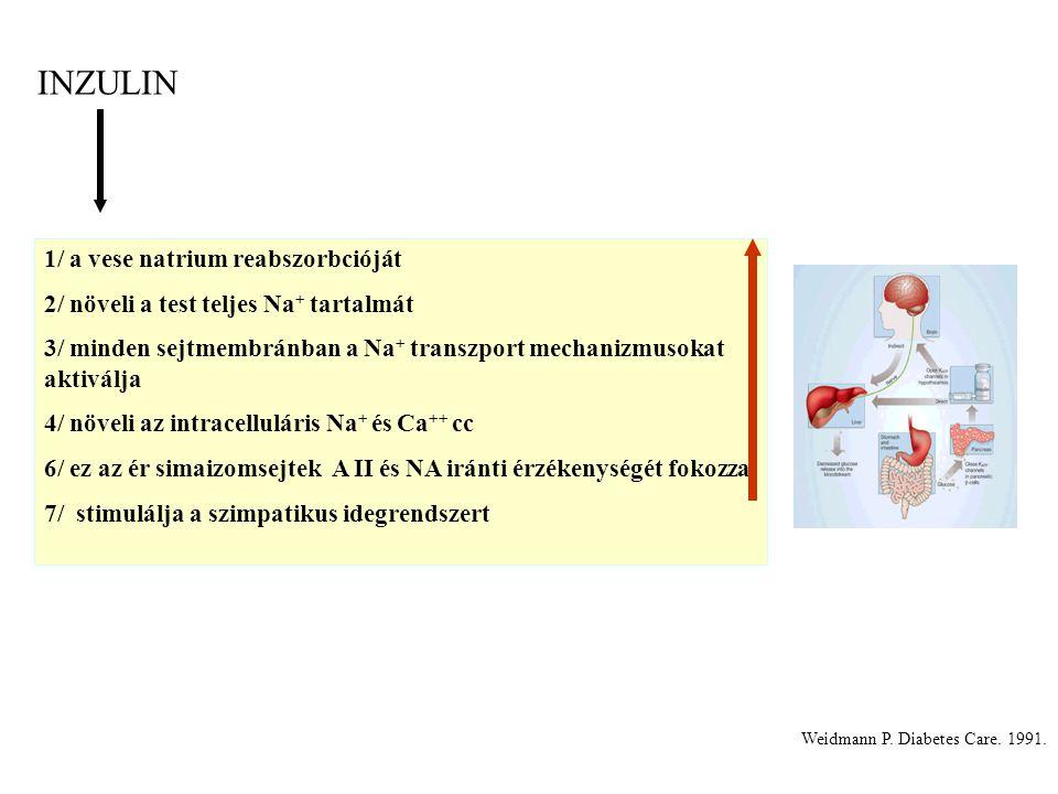 Weidmann P. Diabetes Care. 1991. 1/ a vese natrium reabszorbcióját 2/ növeli a test teljes Na + tartalmát 3/ minden sejtmembránban a Na + transzport m