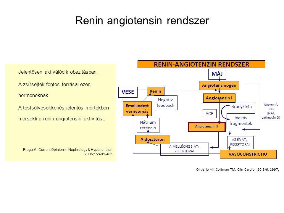 Renin angiotensin rendszer Jelentősen aktiválódik obezitásban. A zsírsejtek fontos forrásai ezen hormonoknak. A testsúlycsökkenés jelentős mértékben m