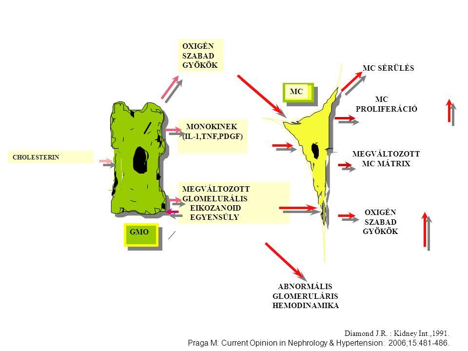 OXIGÉN SZABAD GYÖKÖK MONOKINEK (IL-1,TNF,PDGF) MEGVÁLTOZOTT GLOMELURÁLIS EIKOZANOID EGYENSÚLY CHOLESTERIN MC SÉRÜLÉS MEGVÁLTOZOTT MC MÁTRIX MC PROLIFE