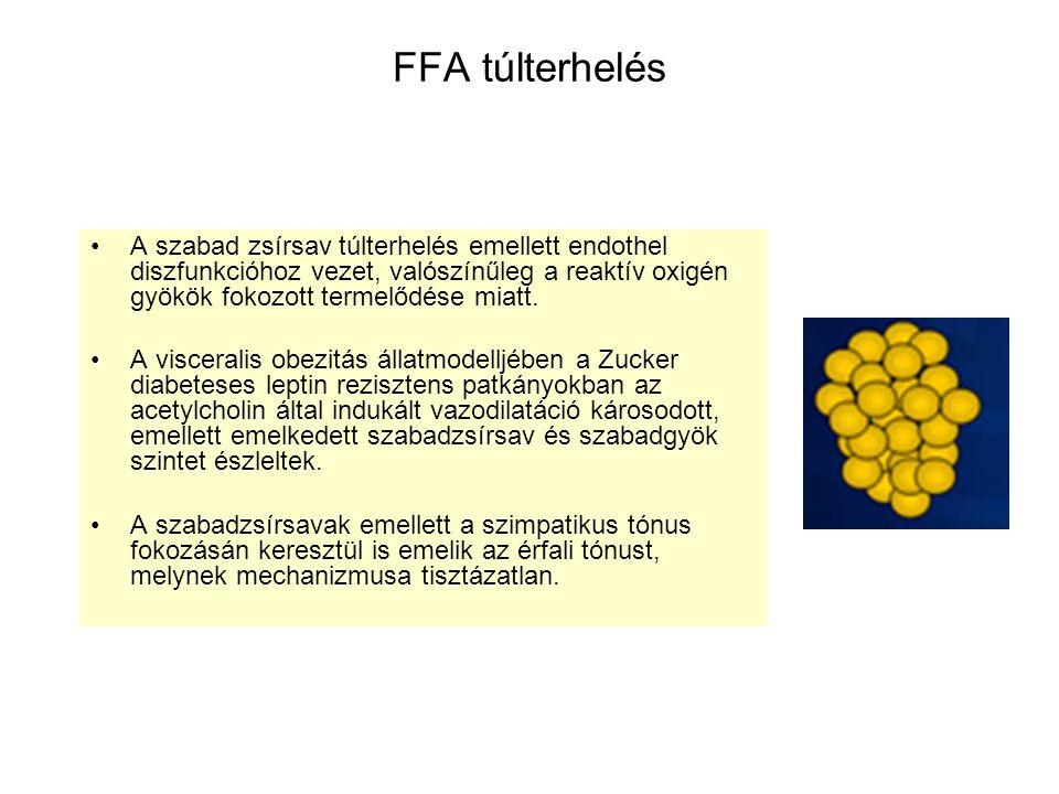 FFA túlterhelés A szabad zsírsav túlterhelés emellett endothel diszfunkcióhoz vezet, valószínűleg a reaktív oxigén gyökök fokozott termelődése miatt.