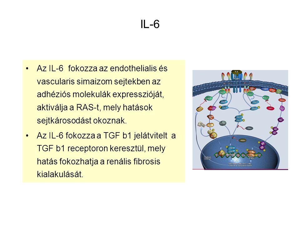 IL-6 Az IL-6 fokozza az endothelialis és vascularis simaizom sejtekben az adhéziós molekulák expresszióját, aktiválja a RAS-t, mely hatások sejtkároso
