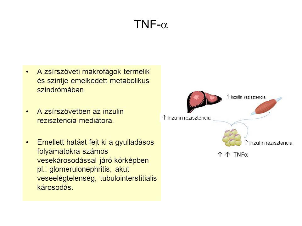 TNF-  A zsírszöveti makrofágok termelik és szintje emelkedett metabolikus szindrómában. A zsírszövetben az inzulin rezisztencia mediátora. Emellett h