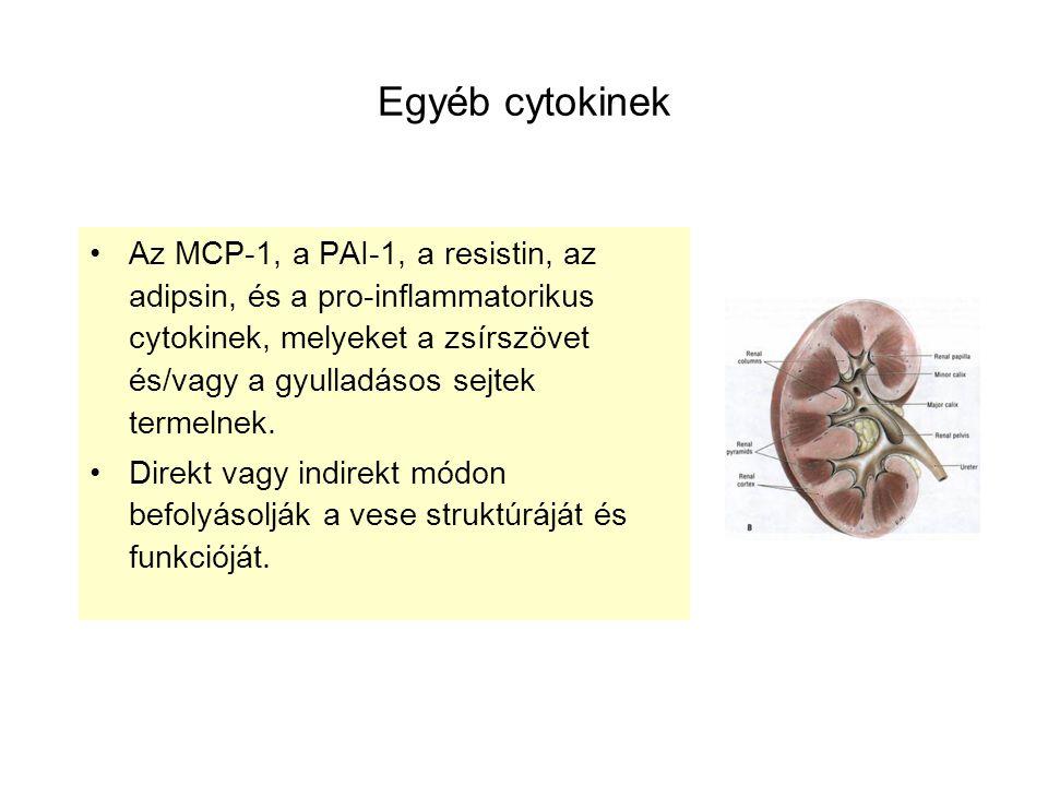 Egyéb cytokinek Az MCP-1, a PAI-1, a resistin, az adipsin, és a pro-inflammatorikus cytokinek, melyeket a zsírszövet és/vagy a gyulladásos sejtek term