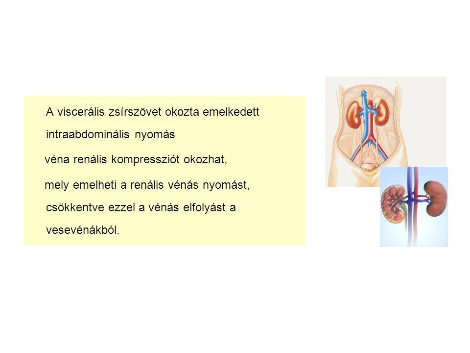 A viscerális zsírszövet okozta emelkedett intraabdominális nyomás véna renális kompressziót okozhat, mely emelheti a renális vénás nyomást, csökkentve