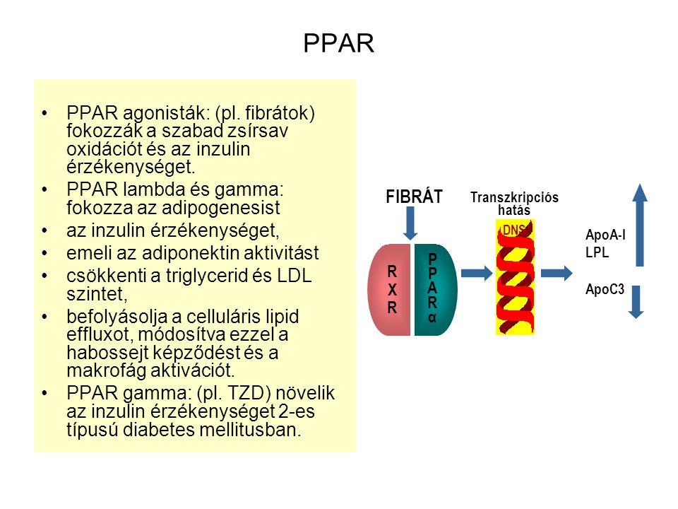 PPAR PPAR agonisták: (pl. fibrátok) fokozzák a szabad zsírsav oxidációt és az inzulin érzékenységet. PPAR lambda és gamma: fokozza az adipogenesist az