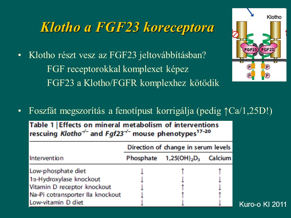 Klotho a FGF23 koreceptora Klotho részt vesz az FGF23 jeltovábbításban.