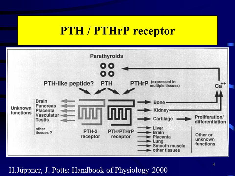 Metabolikus szindróma és a PTH 15