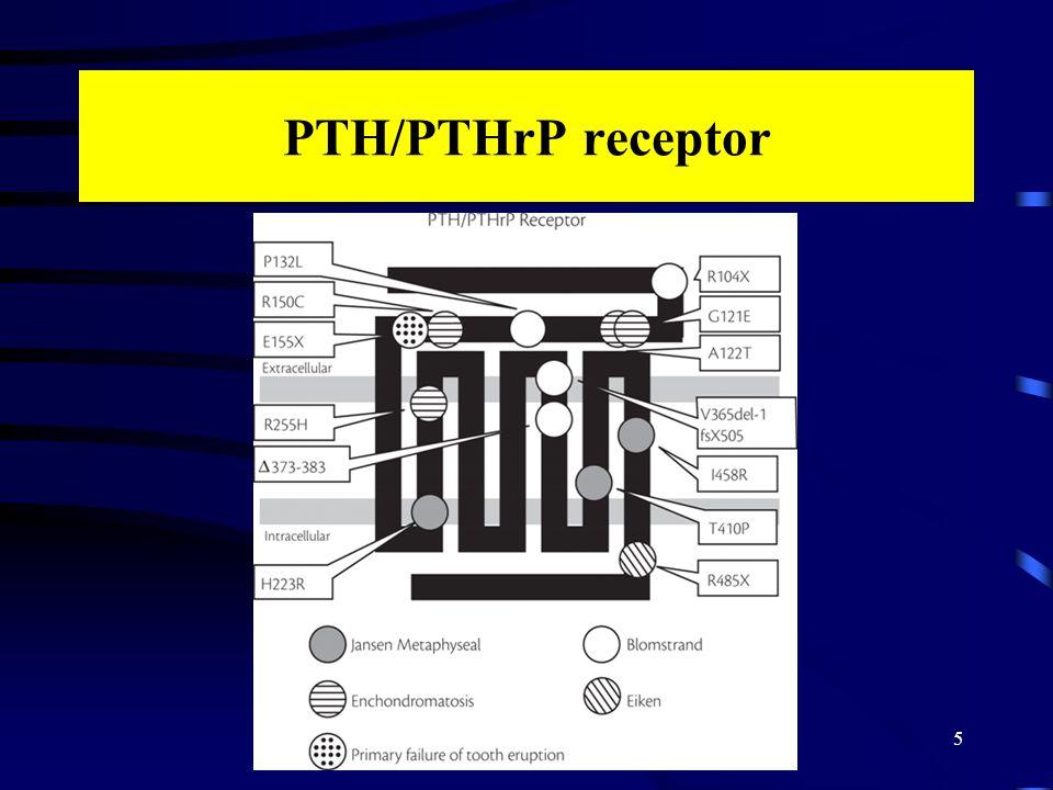 PTH/PTHrP receptor 5