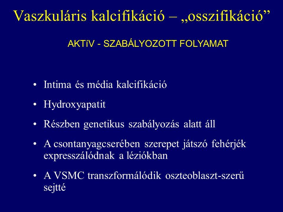 """Vaszkuláris kalcifikáció – """"osszifikáció"""" AKTíV - SZABÁLYOZOTT FOLYAMAT Intima és média kalcifikáció Hydroxyapatit Részben genetikus szabályozás alatt"""