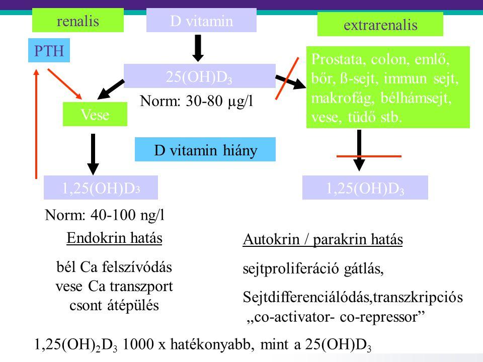 D vitamin 25(OH)D 3 Vese Prostata, colon, emlő, bőr, ß-sejt, immun sejt, makrofág, bélhámsejt, vese, tüdő stb.