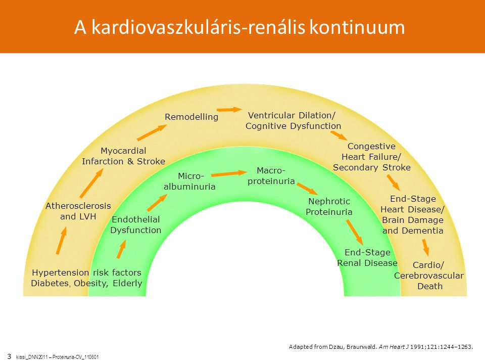 3 kissi_DNN2011 – Proteinuria-CV_110601 A kardiovaszkuláris-renális kontinuum Cardio/ Cerebrovascular Death End-Stage Heart Disease/ Brain Damage and