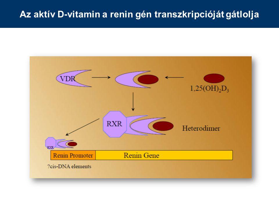 Az aktív D-vitamin a renin gén transzkripcióját gátlolja