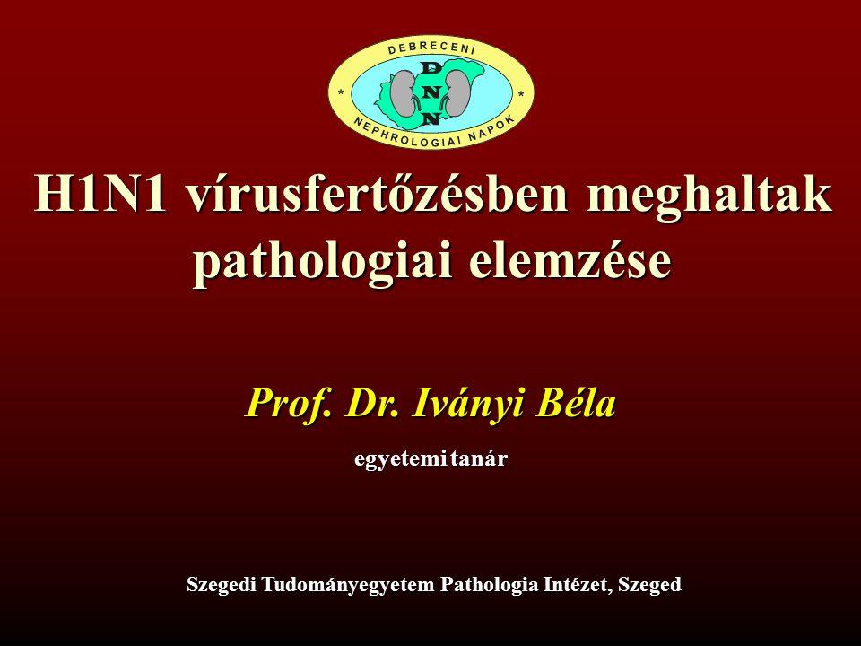 A humán influenza A (H1N1, H2N2, H3N2) fertőzés pathológiája A légutak hámján vírusreceptor Receptorsűrűség: ++++ orr és melléküregek +++ garat ++ légcső, hörgők + bronchiolusok, alveolusok Kuiken, Taubenberger.
