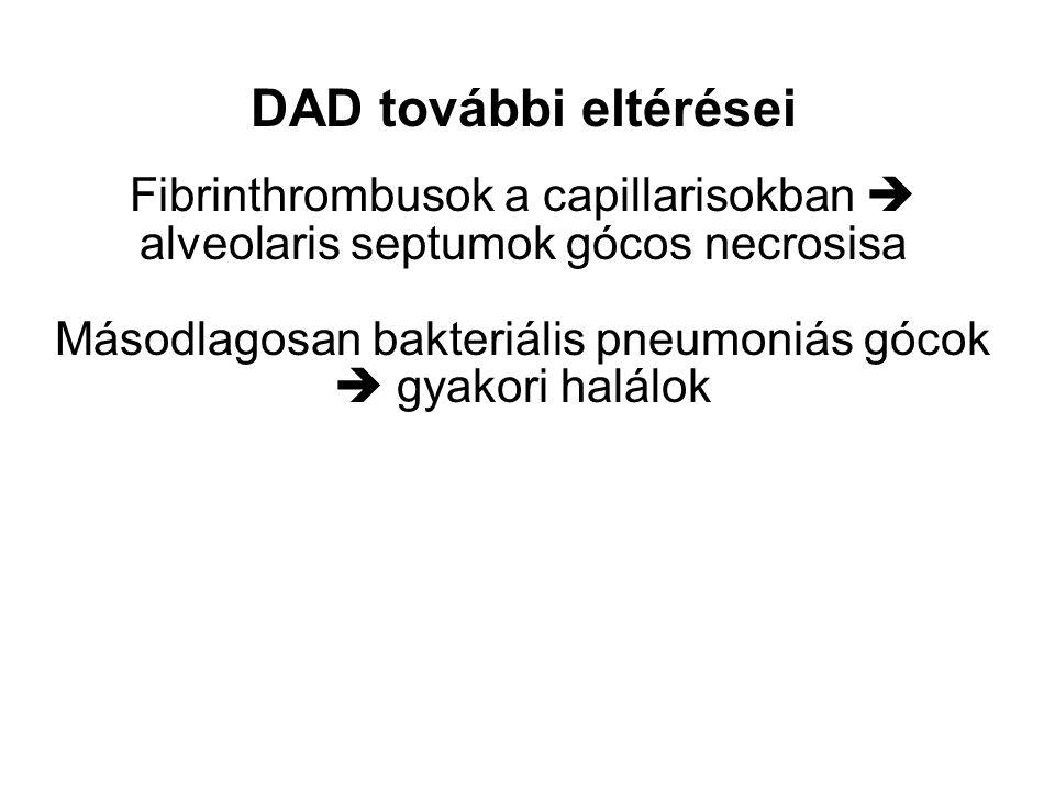 DAD további eltérései Fibrinthrombusok a capillarisokban  alveolaris septumok gócos necrosisa Másodlagosan bakteriális pneumoniás gócok  gyakori halálok