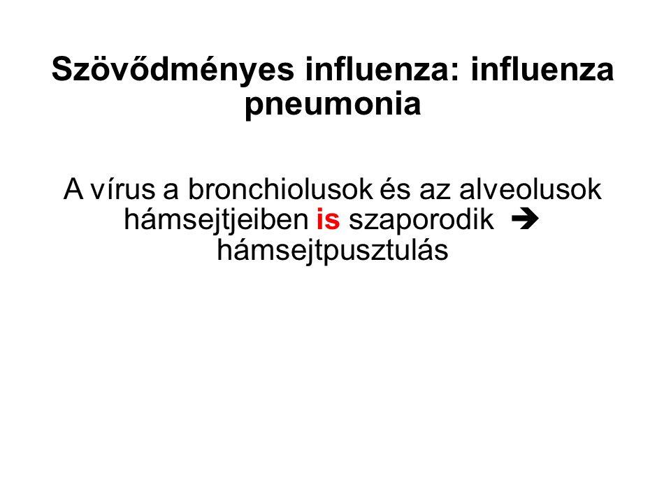 Szövődményes influenza: influenza pneumonia A vírus a bronchiolusok és az alveolusok hámsejtjeiben is szaporodik  hámsejtpusztulás