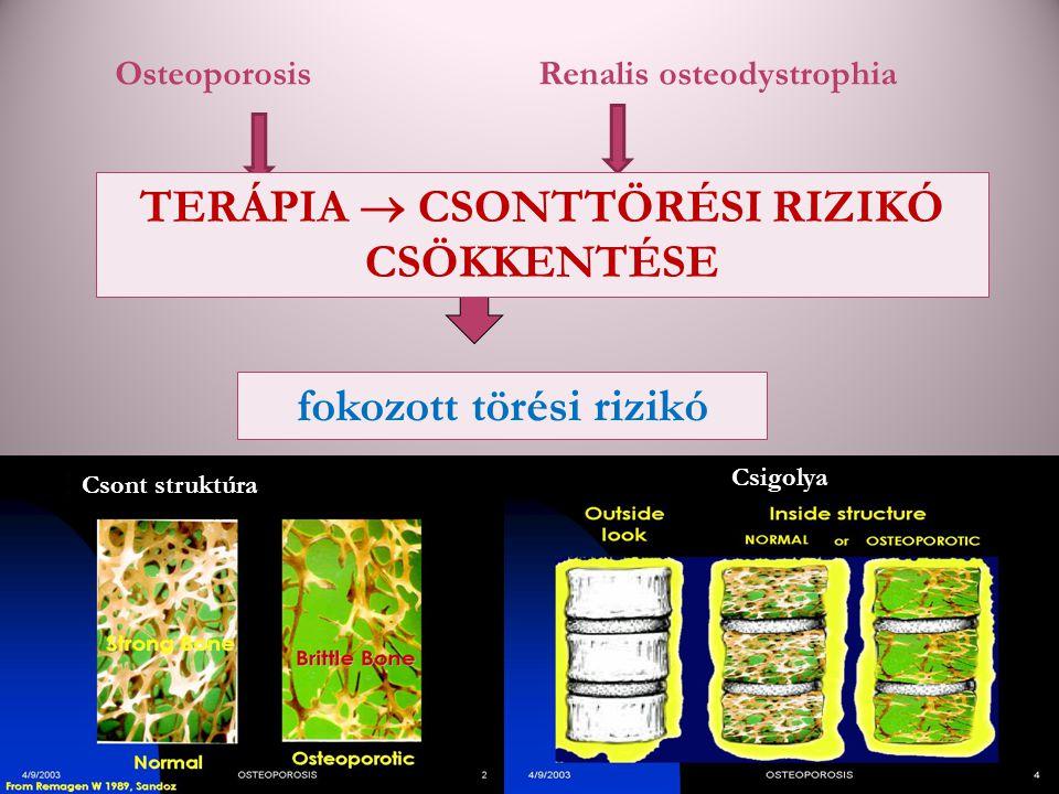 » csontszövet mikroarchitektúrája károsodik fokozott törési rizikó Csigolya Csont struktúra OsteoporosisRenalis osteodystrophia TERÁPIA  CSONTTÖRÉSI