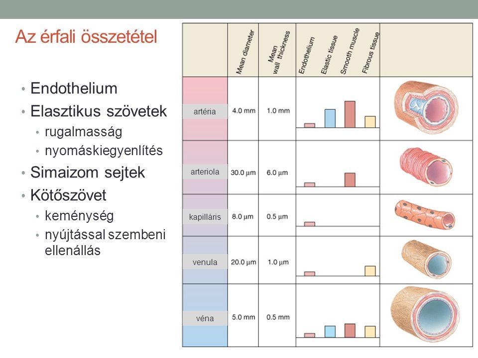 Az érfali összetétel Endothelium Elasztikus szövetek rugalmasság nyomáskiegyenlítés Simaizom sejtek Kötőszövet keménység nyújtással szembeni ellenállá