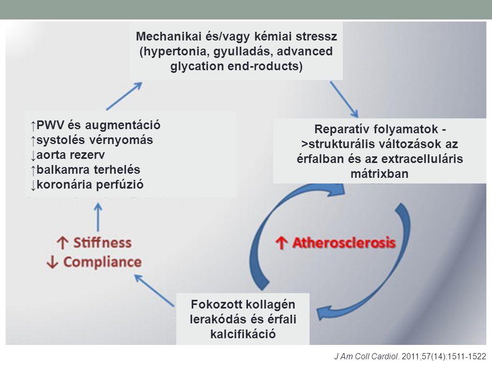 J Am Coll Cardiol. 2011;57(14):1511-1522 Mechanikai és/vagy kémiai stressz (hypertonia, gyulladás, advanced glycation end-roducts) Reparatív folyamato