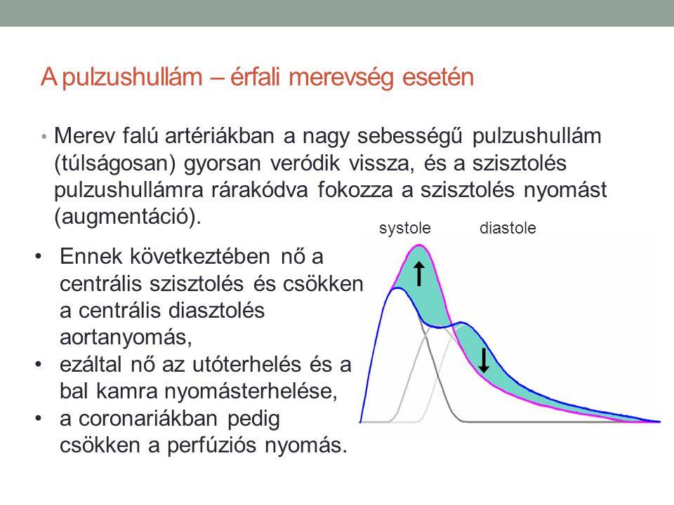 A pulzushullám – érfali merevség esetén Merev falú artériákban a nagy sebességű pulzushullám (túlságosan) gyorsan veródik vissza, és a szisztolés pulz