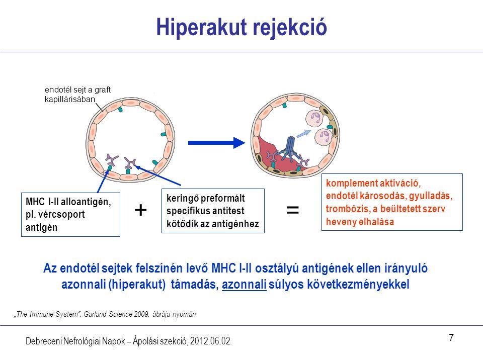 7 Hiperakut rejekció Debreceni Nefrológiai Napok – Ápolási szekció, 2012.06.02. MHC I-II alloantigén, pl. vércsoport antigén komplement aktiváció, end