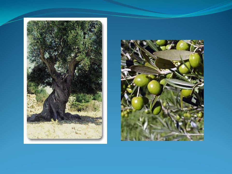 Görög thirea Perzsa pentekontera