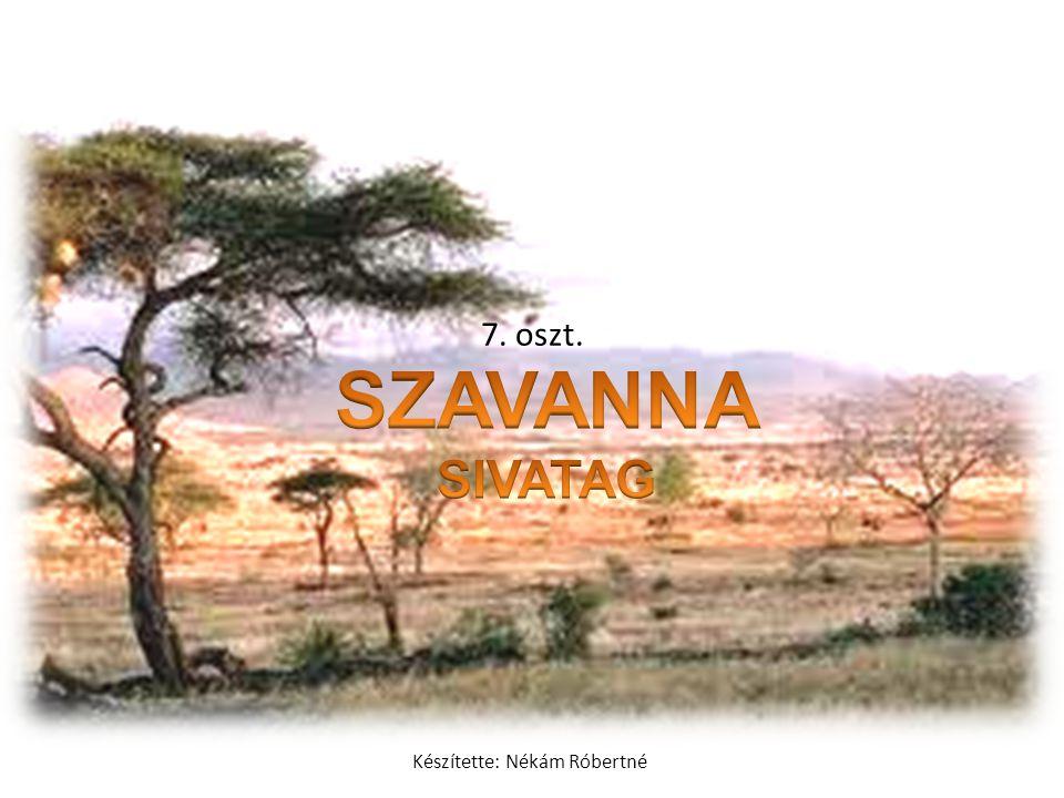 Zebrák: Az antilopokkal rendszerint együtt legelésznek Afrika szavannáin.