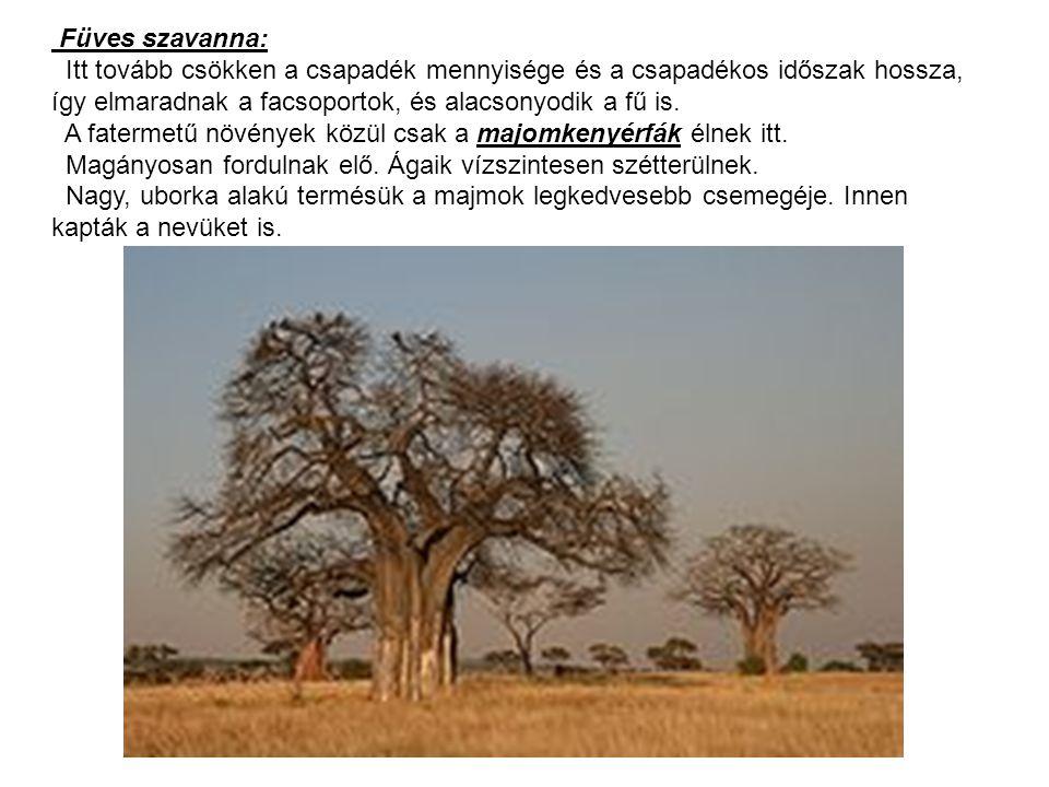 Füves szavanna: Itt tovább csökken a csapadék mennyisége és a csapadékos időszak hossza, így elmaradnak a facsoportok, és alacsonyodik a fű is. A fate
