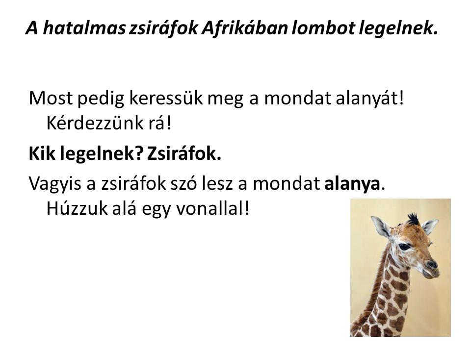 A hatalmas zsiráfok Afrikában lombot legelnek.Ezután tovább kell kérdeznünk.