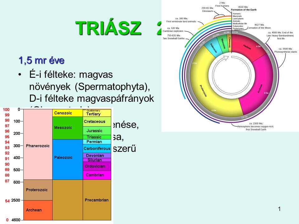 1 TRIÁSZ 251-200 1,5 mr éve É-i félteke: magvas növények (Spermatophyta), D-i félteke magvaspáfrányok (Glossopteris) ősi tiszafák megjelenése, Cikászo