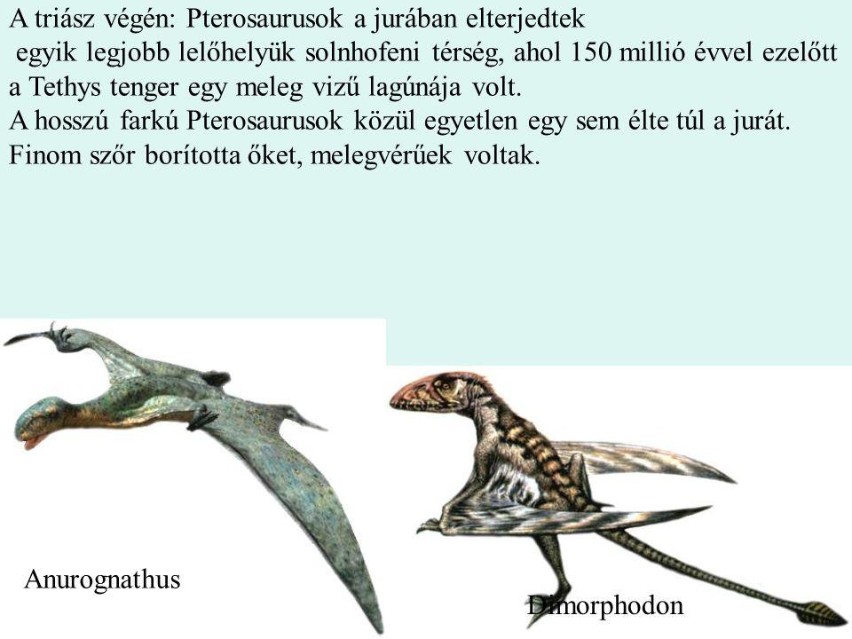 13 A triász végén: Pterosaurusok a jurában elterjedtek egyik legjobb lelőhelyük solnhofeni térség, ahol 150 millió évvel ezelőtt a Tethys tenger egy m
