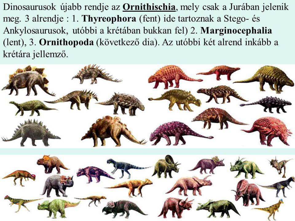 14 Dinosaurusok újabb rendje az Ornithischia, mely csak a Jurában jelenik meg. 3 alrendje : 1. Thyreophora (fent) ide tartoznak a Stego- és Ankylosaur