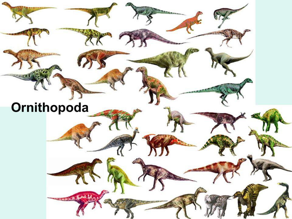 15 Ornithopoda