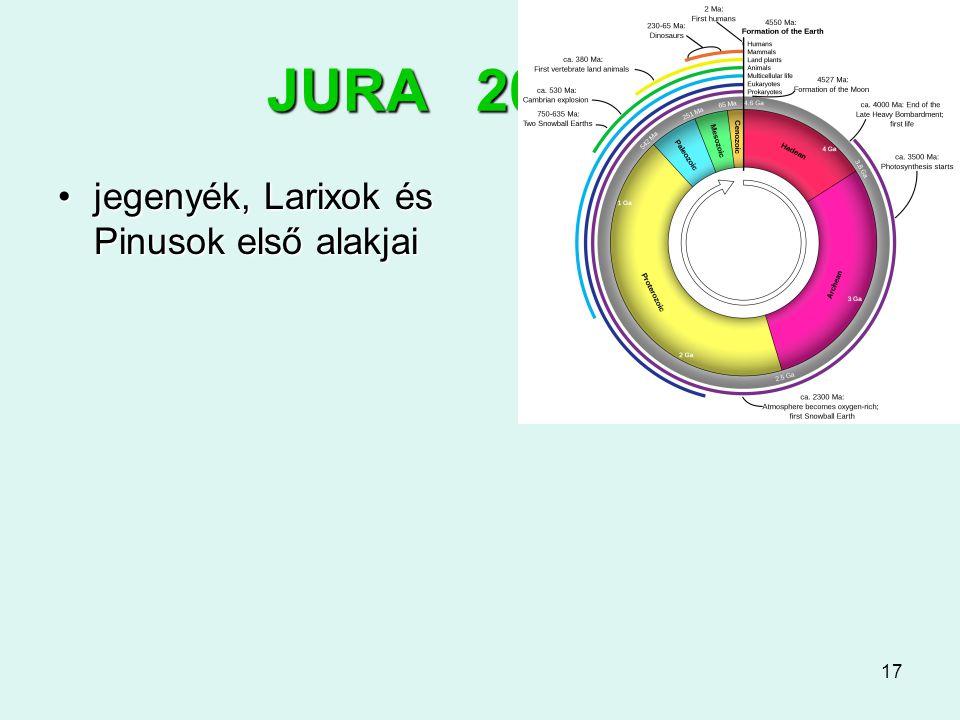 17 JURA 200-145 jegenyék, Larixok és Pinusok első alakjaijegenyék, Larixok és Pinusok első alakjai