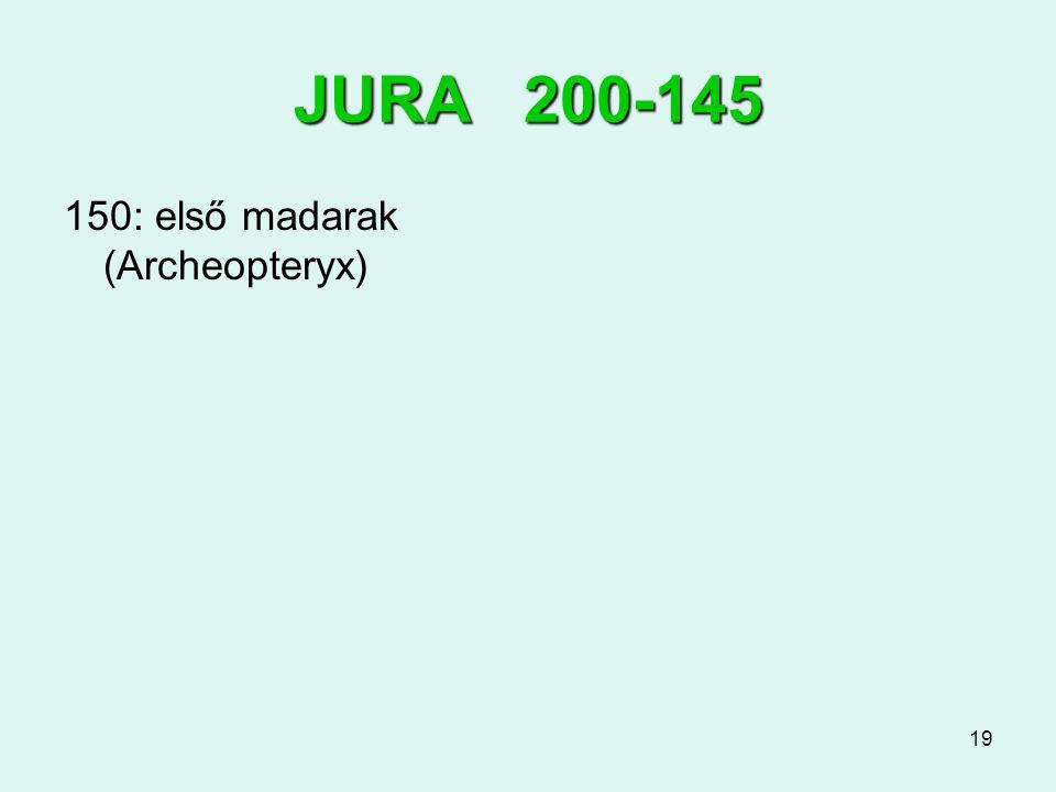 19 JURA 200-145 150: első madarak (Archeopteryx)