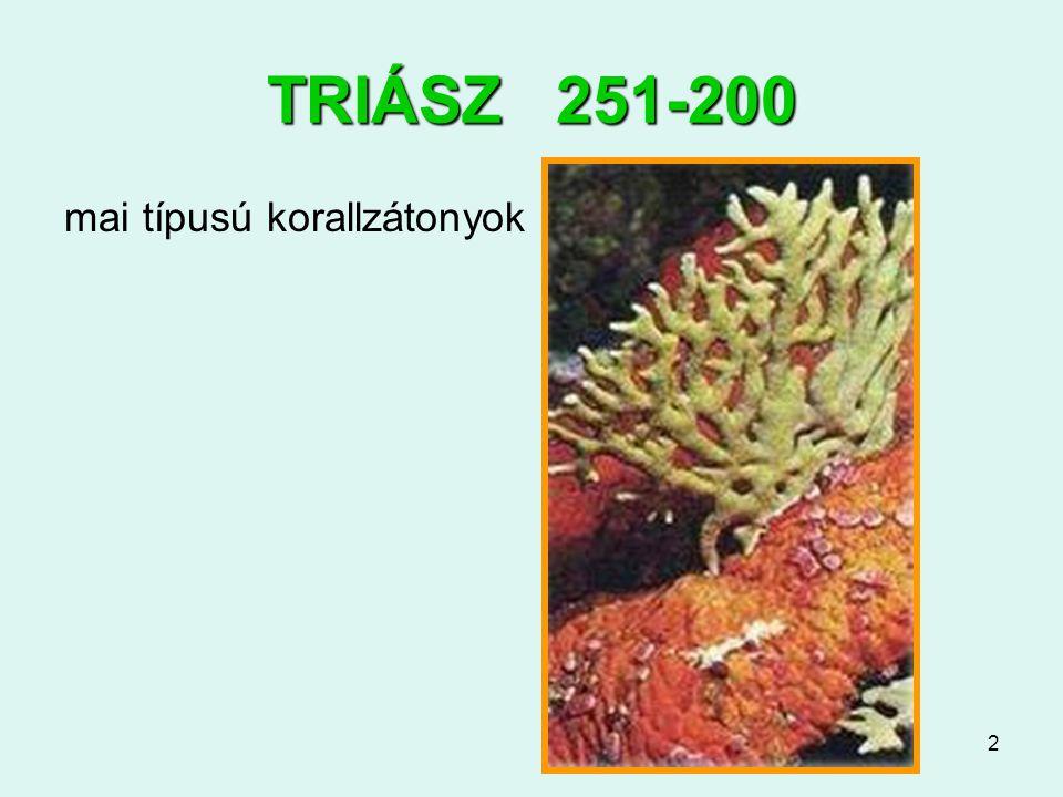 2 TRIÁSZ 251-200 mai típusú korallzátonyok