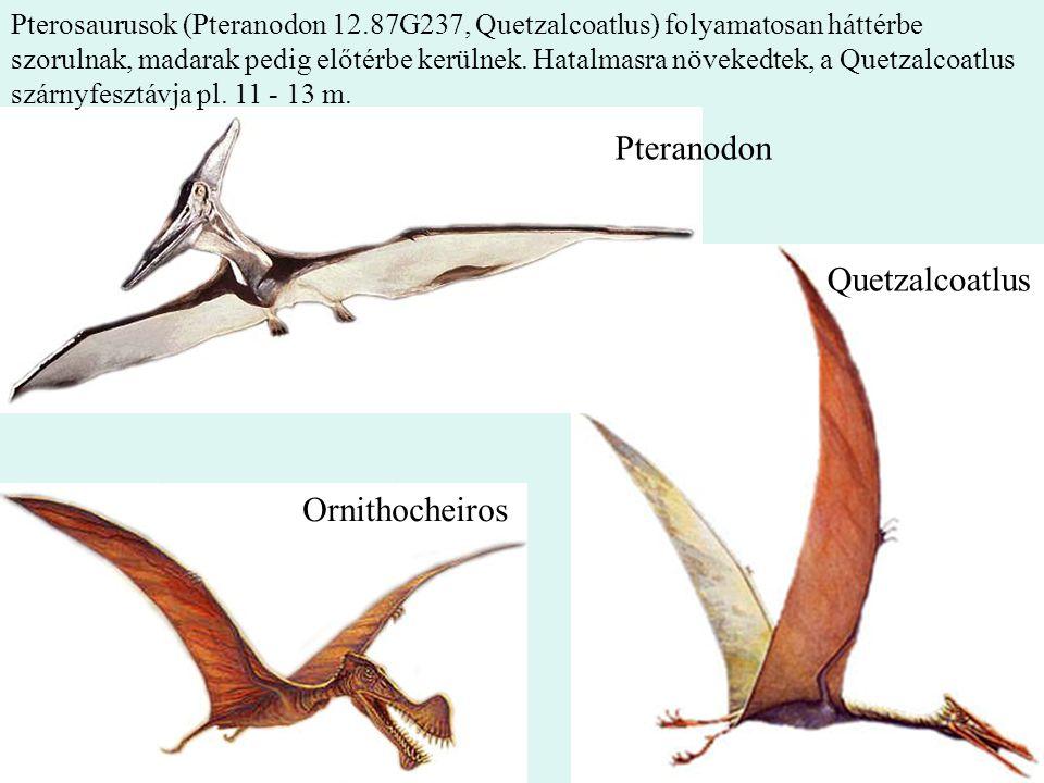 22 Pteranodon Quetzalcoatlus Ornithocheiros Pterosaurusok (Pteranodon 12.87G237, Quetzalcoatlus) folyamatosan háttérbe szorulnak, madarak pedig előtér