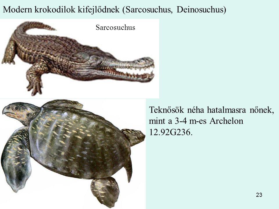 23 Modern krokodilok kifejlődnek (Sarcosuchus, Deinosuchus) Teknősök néha hatalmasra nőnek, mint a 3-4 m-es Archelon 12.92G236. Sarcosuchus
