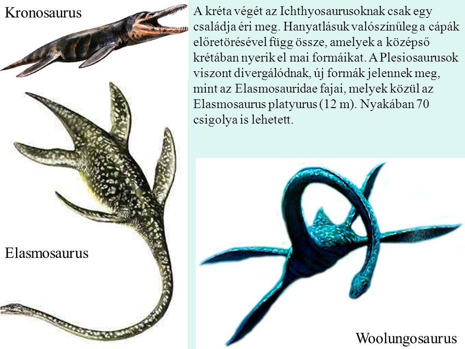 24 A kréta végét az Ichthyosaurusoknak csak egy családja éri meg. Hanyatlásuk valószínűleg a cápák előretörésével függ össze, amelyek a középső krétáb