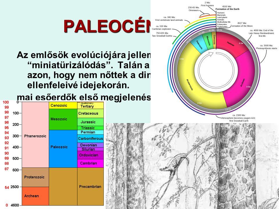"""29 PALEOCÉN 65-55 Az emlősök evolúciójára jellemző volt egyfajta """"miniatürizálódás"""". Talán a fennmaradásuk múlott azon, hogy nem nőttek a dinoszaurusz"""