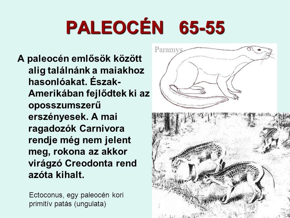 31 PALEOCÉN 65-55 A paleocén emlősök között alig találnánk a maiakhoz hasonlóakat. Észak- Amerikában fejlődtek ki az oposszumszerű erszényesek. A mai