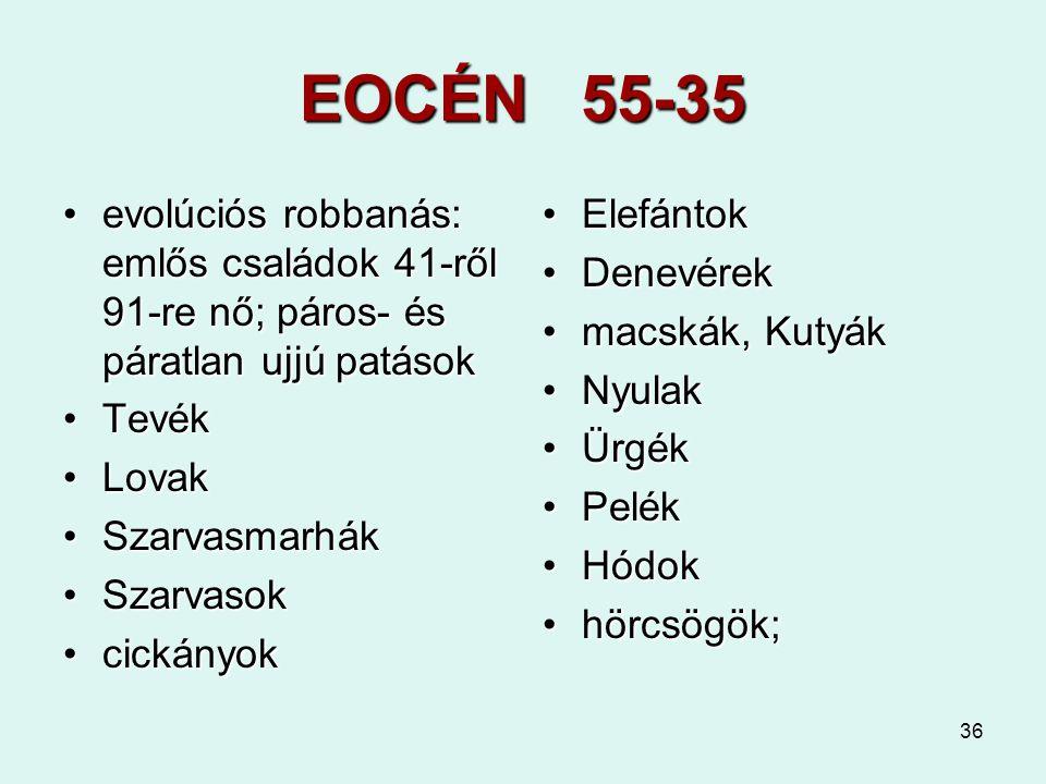 36 EOCÉN 55-35 evolúciós robbanás: emlős családok 41-ről 91-re nő; páros- és páratlan ujjú patásokevolúciós robbanás: emlős családok 41-ről 91-re nő;