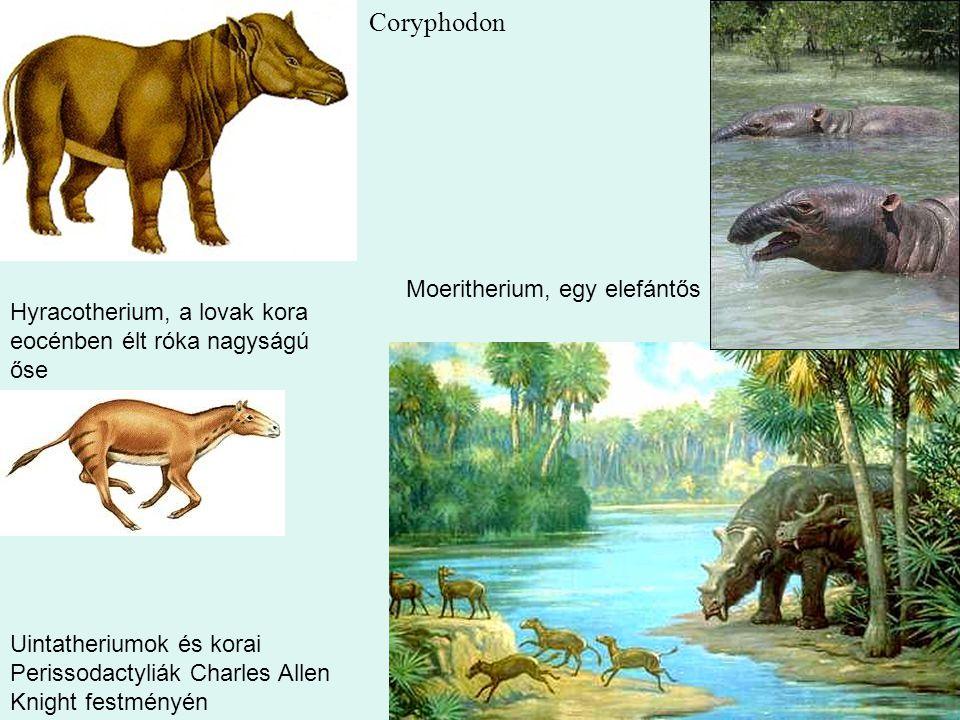 38 Uintatheriumok és korai Perissodactyliák Charles Allen Knight festményén Coryphodon Moeritherium, egy elefántős Hyracotherium, a lovak kora eocénbe