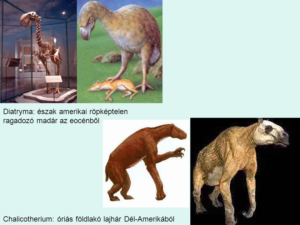 39 Diatryma: észak amerikai röpképtelen ragadozó madár az eocénből Chalicotherium: óriás földlakó lajhár Dél-Amerikából