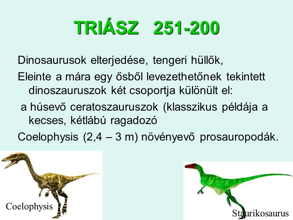4 TRIÁSZ 251-200 Dinosaurusok elterjedése, tengeri hüllők, Eleinte a mára egy ősből levezethetőnek tekintett dinoszauruszok két csoportja különült el: