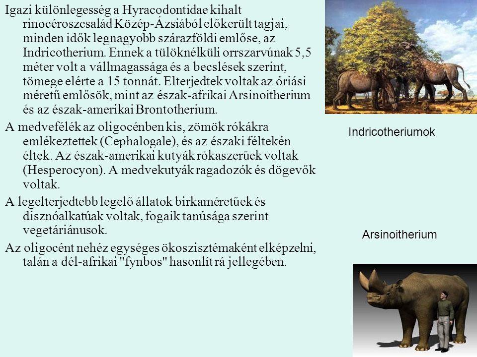 44 Igazi különlegesség a Hyracodontidae kihalt rinocéroszcsalád Közép-Ázsiából előkerült tagjai, minden idők legnagyobb szárazföldi emlőse, az Indrico