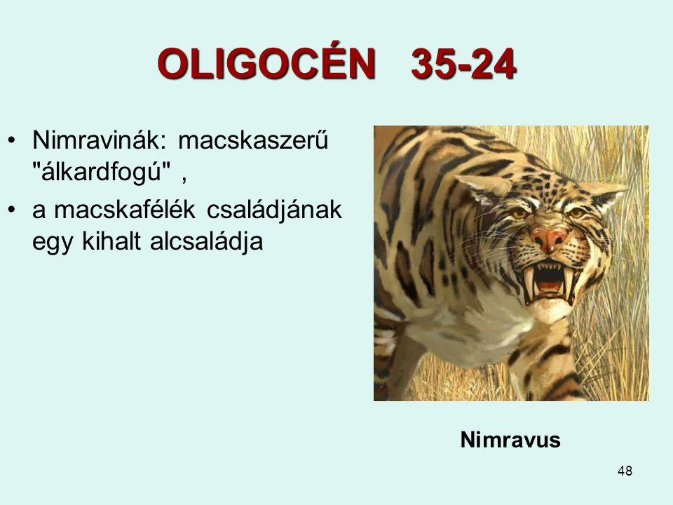 48 OLIGOCÉN 35-24 Nimravinák: macskaszerű