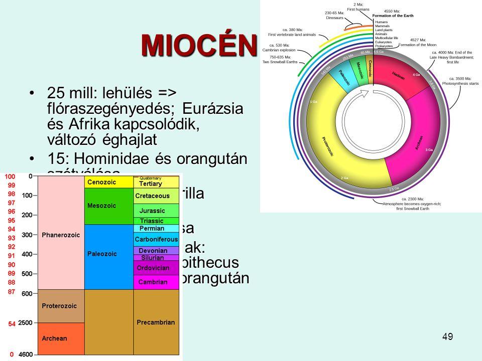 49 MIOCÉN 24-5 25 mill: lehülés => flóraszegényedés; Eurázsia és Afrika kapcsolódik, változó éghajlat25 mill: lehülés => flóraszegényedés; Eurázsia és