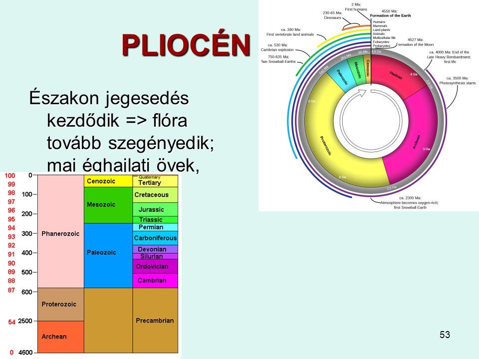 53 PLIOCÉN 5 - 2,6 Északon jegesedés kezdődik => flóra tovább szegényedik; mai éghajlati övek, megafauna